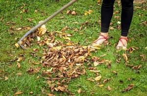 Young woman raking leaves