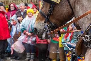 Zahlreiche Pferde begleiten den Rosenmontagsumzug in Köln. Pferde im Karneval haben eine lange Tradition, aber Tierschützer äußern sich stark dagegen