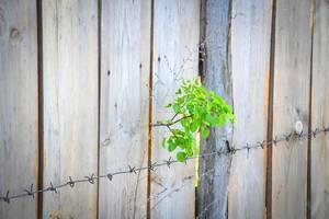 Zarte Pflanze und Stacheldraht