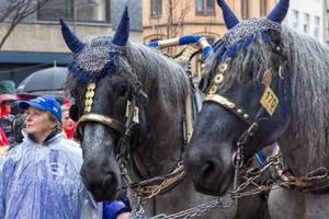 Zwei Pferde von den Blauen Funken von einer Frau begleitet auf dem Rosenmontagsumzug 2020 in Köln
