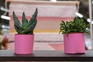 Zwei rosarote Pflanzentöpfe mit Kakteen vor rosa-weißem Hintergrund mit Unschärfe