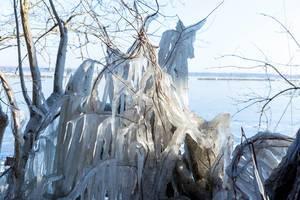 Zweige, Äste und Lianen bedeckt mit einer dicken Eisschicht